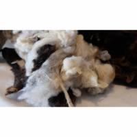 100 Gramm Rohwolle vom Herdwick, zum Spinnen, Filzen und Basteln Bild 1