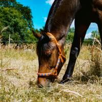 Pferdehalfter Tauhalfter mit Leder, komplett handgenäht, für Mini Shetty, Shetty, Pony, Cob, Warmblut, Kaltblut Bild 6