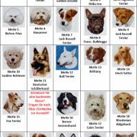 Hundehalstuch pink mit Namen und Motiv personalisiert / bestickt - über 200 Hundemotive - viele Schriftarten Bild 4