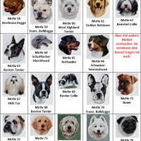 Hundehalstuch orange mit Namen und Motiv personalisiert / bestickt - über 200 Hundemotive - viele Schriftarten Bild 6