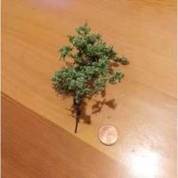 Bäume Baum Bild 1