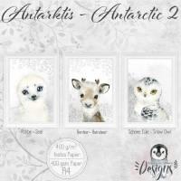 ANTARKTIS ( 2 ) Kinderzimmer Baby Bilder Poster Set Tiere Robbe, Rentier, Schnee Eule,  Kunstdruck Wildnis |Set 44/Arctis 2 Bild 1