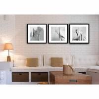 Segel 3er Set gerahmt Bild je 35x35 cm, Schwarz Weiß Fotografie Vintage Kunstdruck Bilderwand Wanddekoration Bild 1