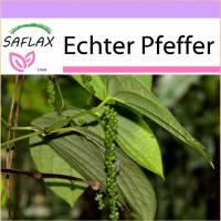SAFLAX - Kräuter - Echter Pfeffer - 20 Samen - Piper nigrum Bild 1