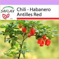 SAFLAX - Chili - Habanero Antilles Red - 10 Samen - Capsicum chinense