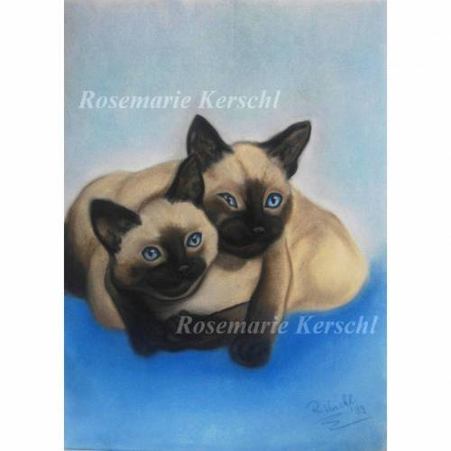 Siam Katzen handgemaltes Pastellkreidebild Tierporträt 40 x 30 cm in Hochformat