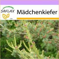 SAFLAX - Mädchenkiefer - 10 Samen - Pinus parviflora Bild 1