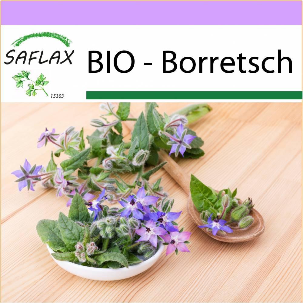 SAFLAX - BIO - Borretsch - 40 Samen - Borago officinalis Bild 1