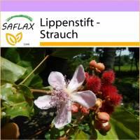 SAFLAX - Lippenstift - Strauch - 20 Samen - Bixa orellena Bild 1