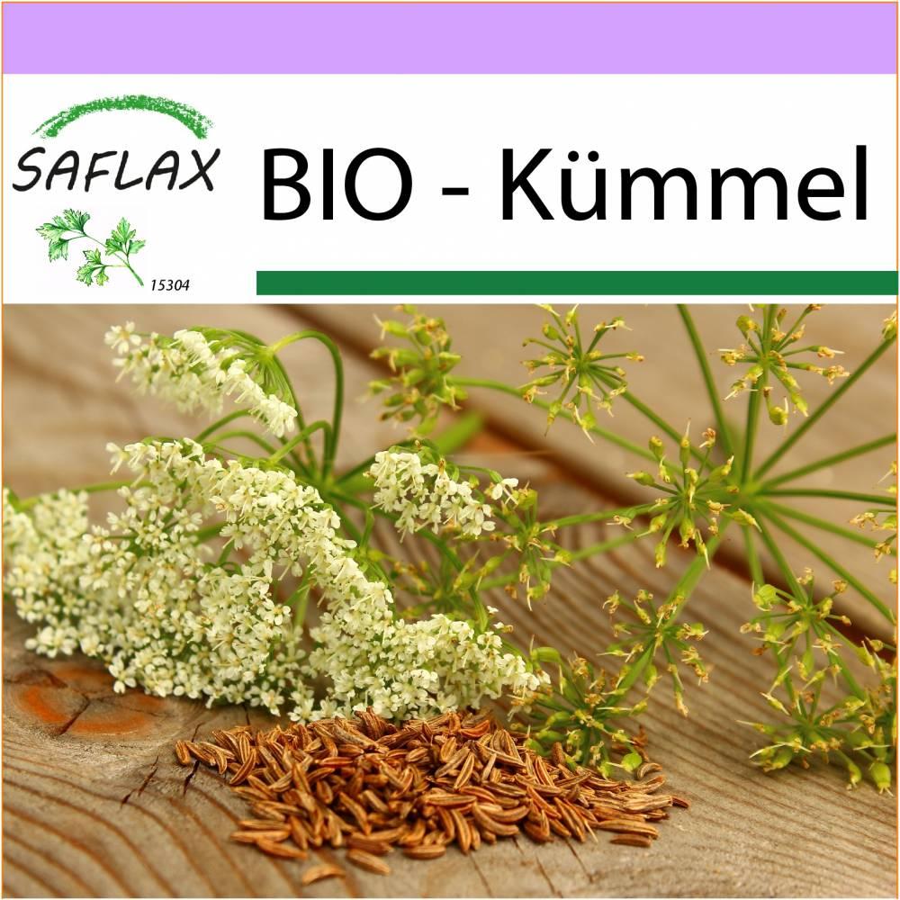 SAFLAX - BIO - Kümmel - 800 Samen - Carum carvi Bild 1
