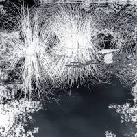 Uferzone Fotografie Kunstdruck Aluminiumdibond Butlerfinish Bild 1
