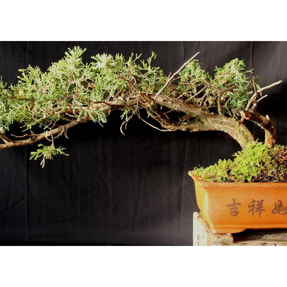 Bonsai lebanon zeder investments home based computer jobs without investment in nashik maharashtra