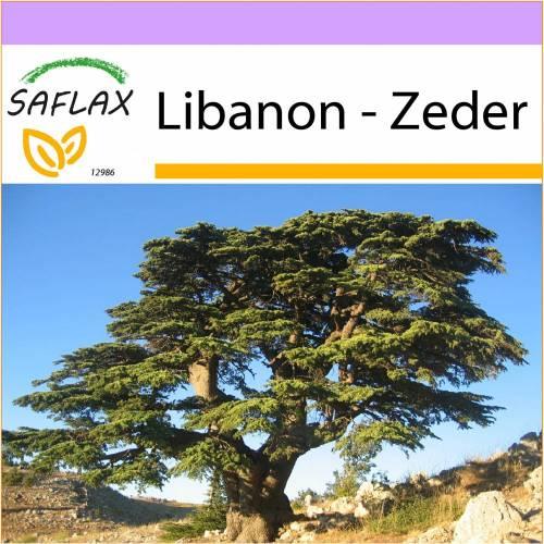 SAFLAX - Libanon - Zeder - 20 Samen - Cedrus libani