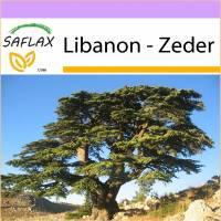 SAFLAX - Libanon - Zeder - 20 Samen - Cedrus libani Bild 1