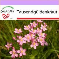 SAFLAX - Heilpflanzen - Tausendgüldenkraut - 250 Samen - Centaurium erythraea Bild 1