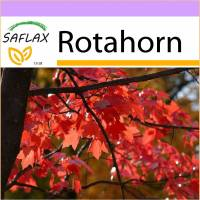 SAFLAX - Rotahorn - 20 Samen - Acer rubrum Bild 1