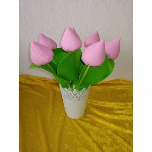 Tulpen Rosa oder Rosa mit Weißen Punkten