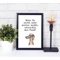 Hunde Poster, Dackel Illustration Bild 1