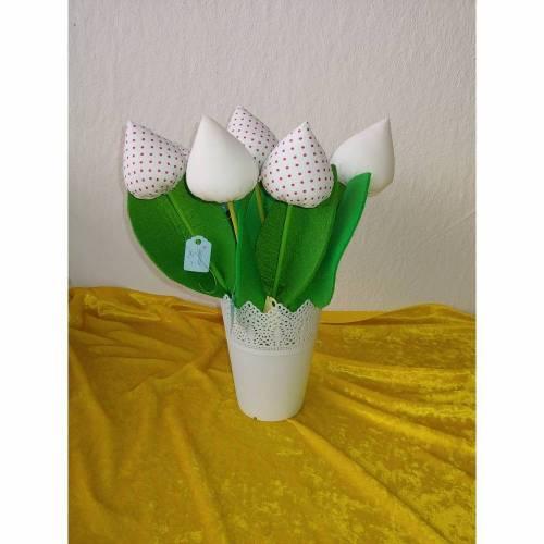 Tulpen Weiß oder Weiß mit Roten Punkten