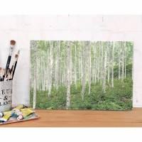 Bild Landschaft BIRKENWALD Vintagebild auf Holz Leinwand Print Wanddeko Landhausstil Shabby Chic  Bild 1