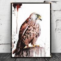 """Falke Aquarell Poster, """"Turmfalke"""", Print, Bild, Druck, Falkenposter, Falcon, Falknerei, Jäger, Adler, Raubvogel Vogel Bild 1"""