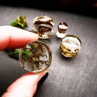 Plug, Moos,, Harz, handmade,Piercing ,Ohrpiercing , Tunnel, 1 Stück, Bild 1