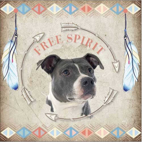 Hundebild Native American Staffordshire
