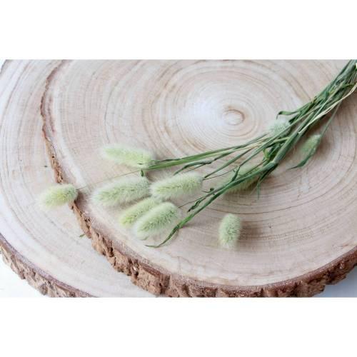 BIO Trockengräser Lagurus/ Samtgrass als Trockenblumen-Arrangement oder als Dekoration für Hochzeitstorten Natur (DEMETER)