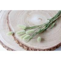 BIO Trockengräser Lagurus/ Samtgrass als Trockenblumen-Arrangement oder als Dekoration für Hochzeitstorten Natur (DEMETER) Bild 1