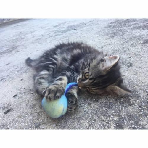 Katzenspielzeug Spielball mit Glöckchen handgefilzt blau meliert