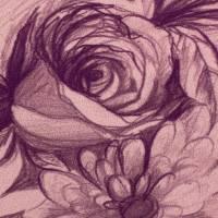 Basel, Sweat angeraut Blüten Skizze altrosa Oeko-Tex Standard 100(1m/17,-€)  Bild 1