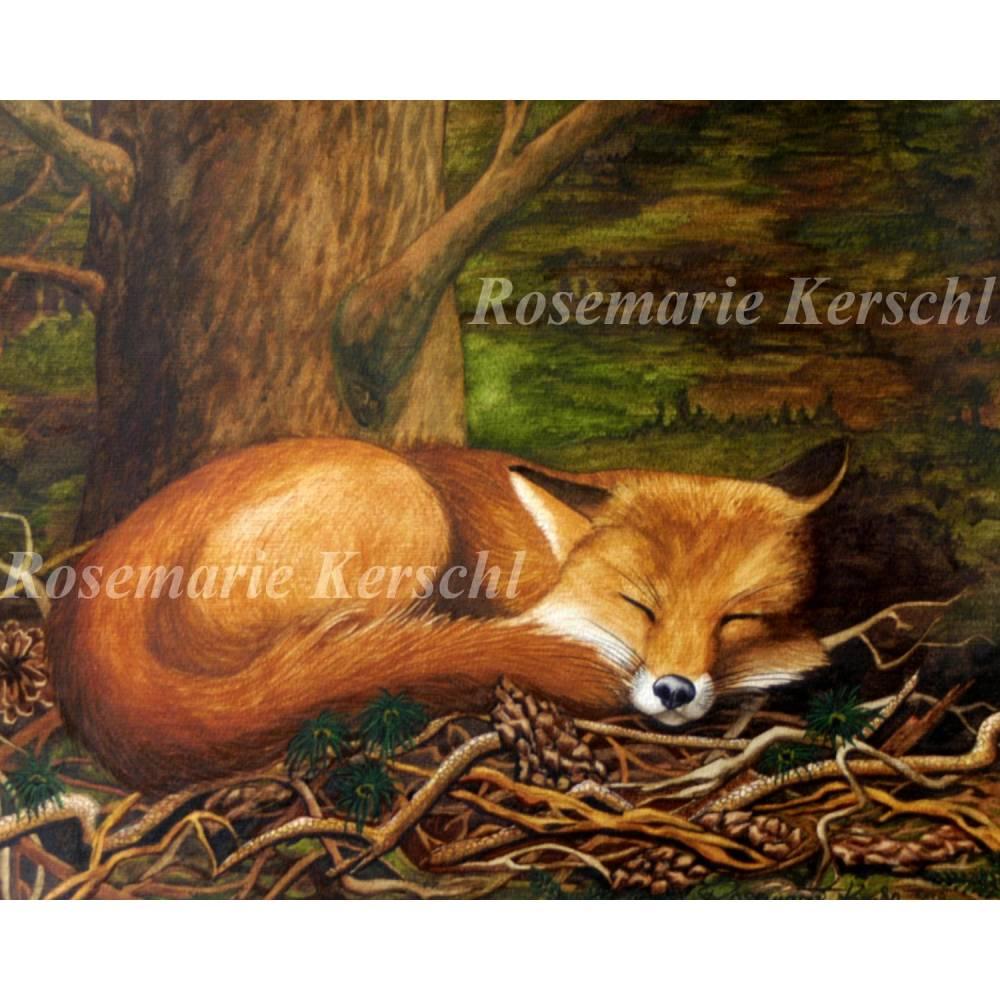 Schlafender Fuchs im Wald Aquarellbild handgemalt 42 x 56 cm in Querformat Bild 1