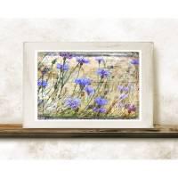 KORNBLUMEN Feldblumen Bild auf Holz Leinwand Kunstdruck Wanddeko Landhausstil Shabby Chic Vintage Style Bild 1