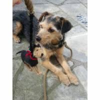 Kotbeutelspender aus Filz nach dem Foto deines Hundes, individuelles Täschchen zum Gassigehen, personalisiert Bild 2