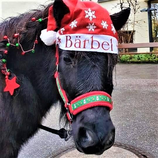 "Halfter Mini Shetty ""Christmas"" Bild 1"