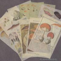 "Sticker-Set ""Pilze""  10-teilig Bild 1"