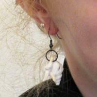 Muschel Ohrhänger Pelikanfuss in weiss mit schwarzen Ohrhaken,maritimer nachhaltiger Schmuck Bild 8