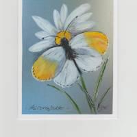 Grußkarte / Frühlingsgruß-   Aurorafalter-   handgemalt Bild 1