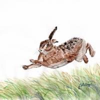 Feldhase, Rabbit,  Aquarell, 21 x 29 cm, A4, Frühling, Tier Portrait, hangemalt, Unikat Bild 1