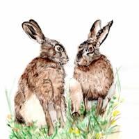 Zwei Feldhasen, Rabbit,  Aquarell, 21 x 29 cm, A4, Frühling, Tier Portrait, hangemalt, Unikat Bild 1