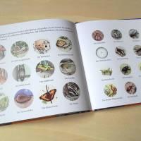 """Bilderbuch """"Wie das Eichhörnchen seinen Glücksstern fand"""", eine Botschaft für Kinder und Erwachsene Bild 8"""