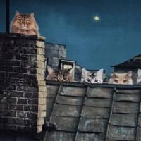 Jersey Panel Katzen auf dem Dach Digitaldruck 120 x 150 cm Stoff Stenzo Bild 1