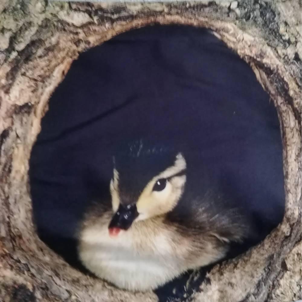Mit der richtigen Dekoration kommt die Vorfreude auf das Osterfest ganz automatisch, Wendekissen gefüllt. Bild 1