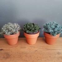 Kaktus/Sukkulente im Tontopf - gehäkelt - Dekoration Bild 1