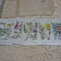 Pflanzen Mitteleuropas - Kartenspiel aus der DDR Bild 3