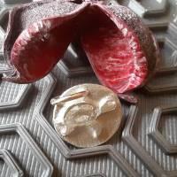 Runder Anhänger mit  Schildkröte aus 999 Silber Bild 7