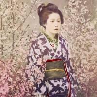 Portrait Geisha mit Kirschblüten Vintage, Japanische Kunst gerahmter Kunstdruck Bild - Collotype ca. 1880 - Geschenk  Bild 3