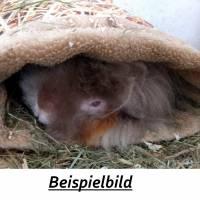 Kuschelrolle, Kuschelsack oder Hängematte für Meerschweinchen  Bild 6
