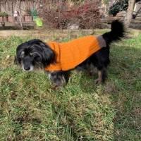 Hundepullover mit Zopfmuster für kleine Hunderassen Bild 1