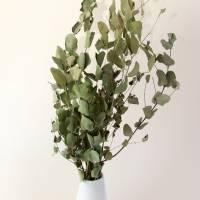 BIO Eukalyptus Bund getrocknet für DiY-Arrangements (DEMETER)  Bild 1